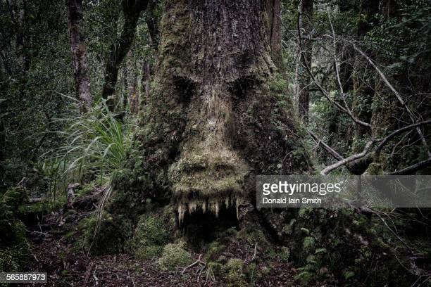 Face growing in moss on tree in lush forest