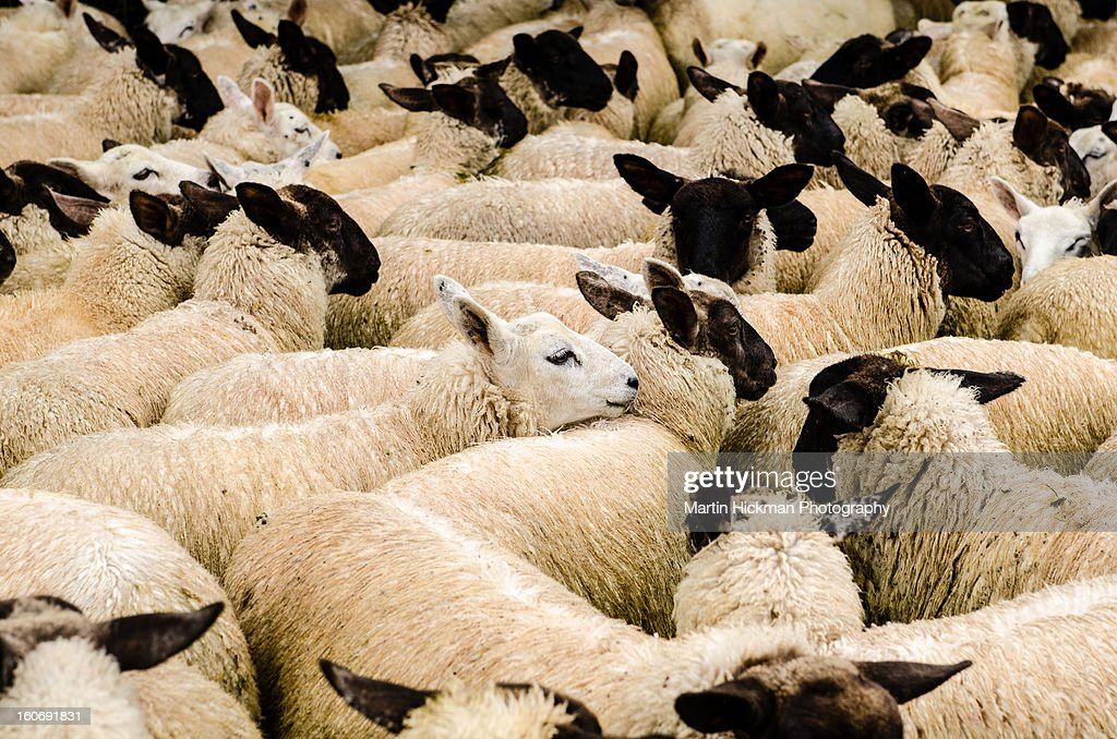 A face in a crowd. : Stock Photo