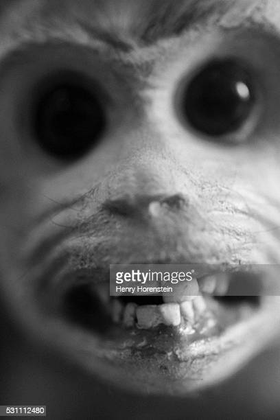 face of a crab-eating macaque - ugly monkey stock photos and pictures