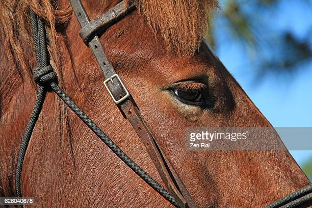 Face of a working horse and bridle - close-up
