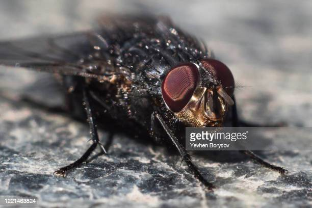 face of fly with big red eyes in macro - images of ugly feet stock pictures, royalty-free photos & images