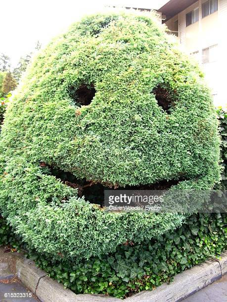 face topiary in back yard - トピアリー ストックフォトと画像