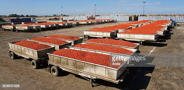 Factory producing tomato juice sauce and puree in Lemoore California United States Trailers full of tomatoes before processing