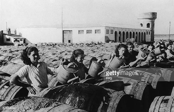 Factory workers fill barrels of olives with water for export November 1949