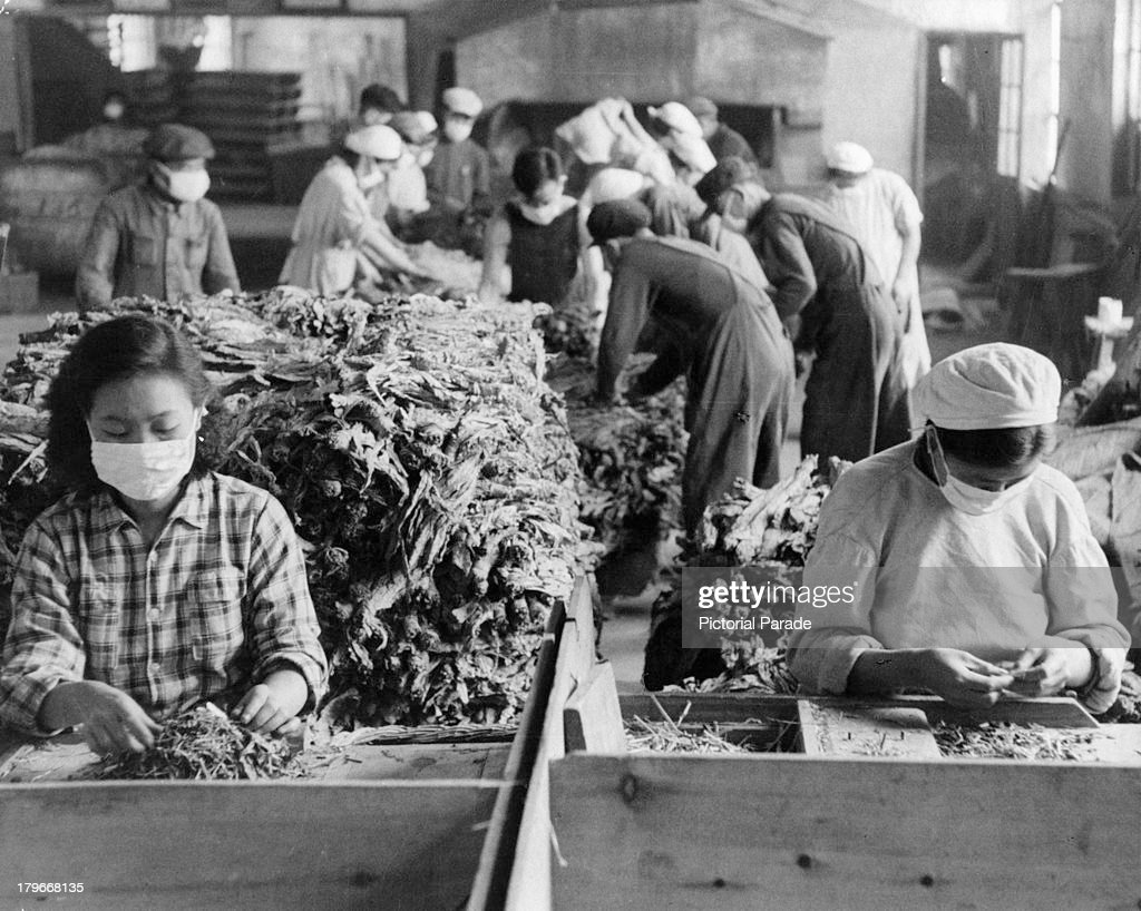 Factory workers wear surgical masks as they sort through tobacco leaves in a cigarette factory in Chang-Chun, Manchuria, China.