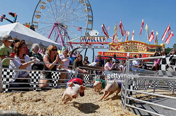 Fair goes cheer for their favorite pig during a pig race at the Maryland State Fair September 3 2009 in Timonium Maryland Due to the current economic...
