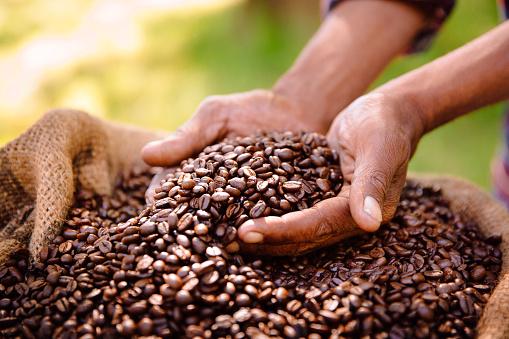 Fair trade farming is best for coffee bean produce 468607708