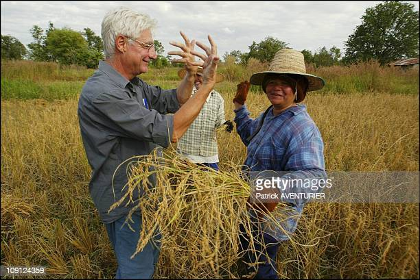 Fair Trade Max Havelaar Rice Harvest In Thailand On November 29 2004 In Thailand M Soule Relaxes While Dancing With Ban Phoem Inhabitants During The...
