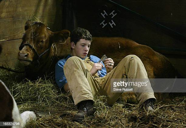 FAIR11/14/04Resting on a 500 pound pillow Cameron Lynch of Lindsay rest with his cow Bertha in the Agriculture Exhibits as the Royal Winter Fair...