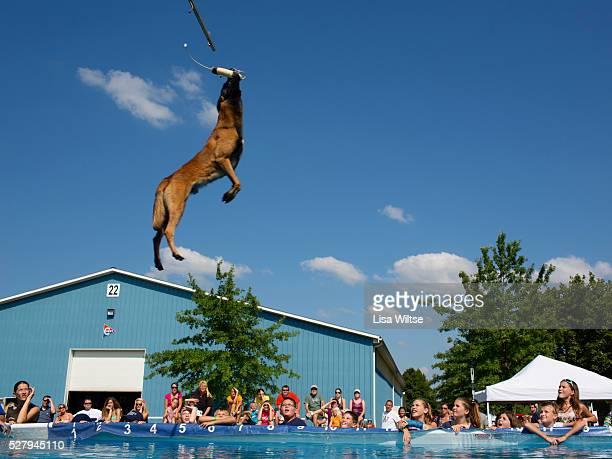 Fairgoers watch an acrobatic dog show at the Medina County Fair in Medina Ohio on August 1 2012 Photo Lisa Wiltse