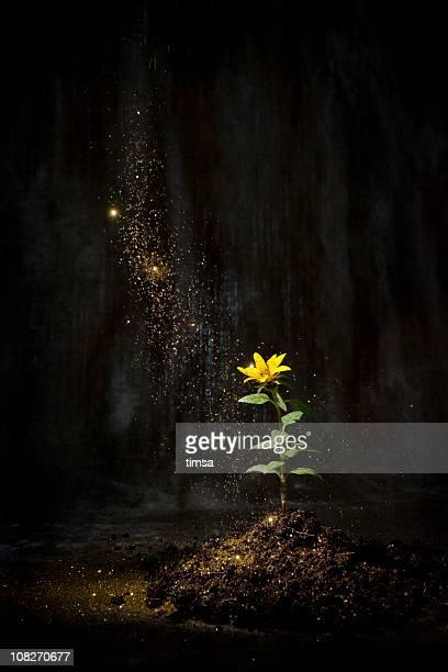 Poussière de fée de vous installer sur une fleur