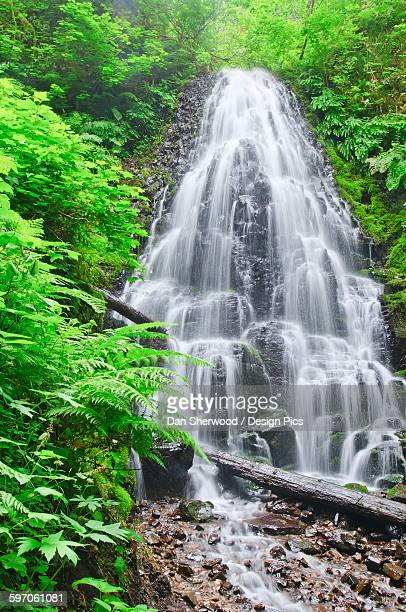 fairy falls in the columbia river gorge - dan sherwood photography stock pictures, royalty-free photos & images
