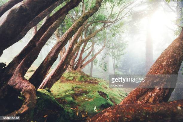 Fairy Forest On Madeira Island
