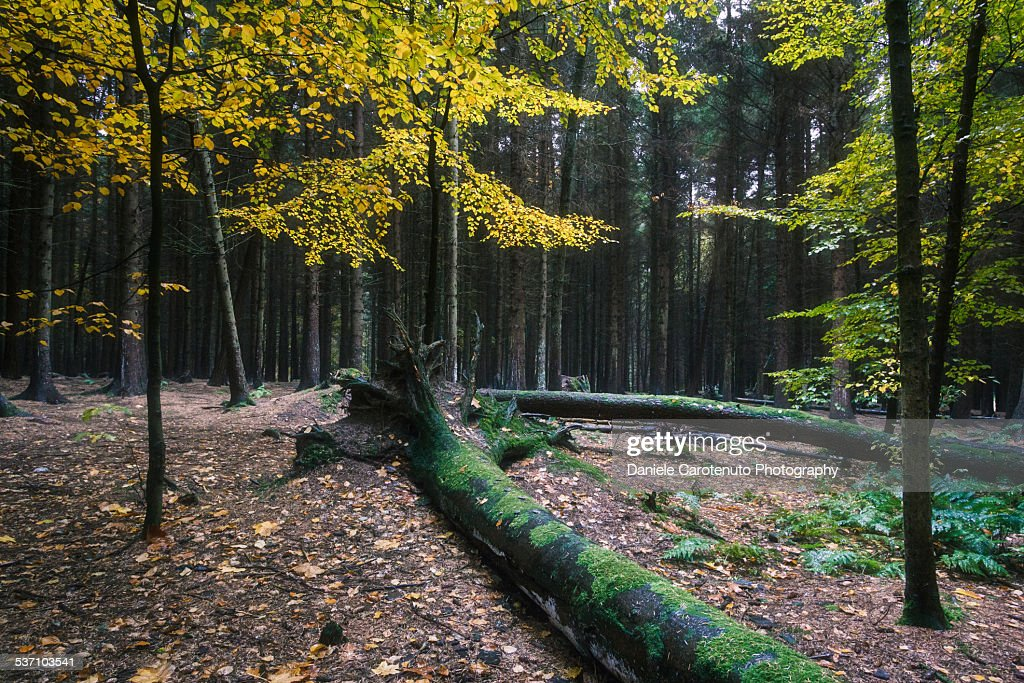 Fairy forest : Stock Photo