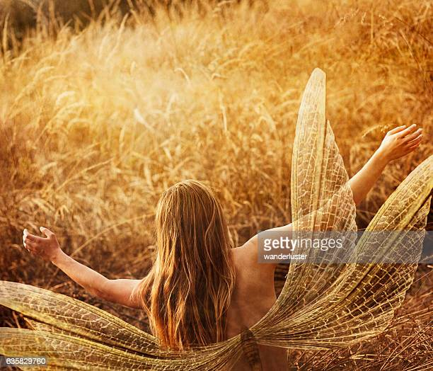 Fairy in golden grasses
