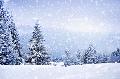 Fairy winter landscape with fir trees 868213434