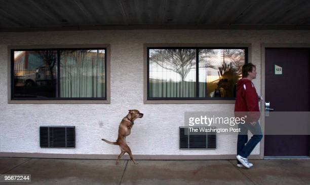 Faith the dog walks to room at Red Roof Inn with her family member Jude Stringfellow Faith was born without front legs and has learned to walk...