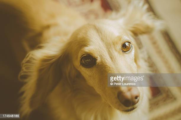 faithful friend - peter lourenco stock pictures, royalty-free photos & images