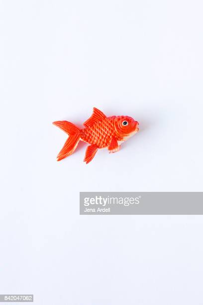Fake Goldfish on White Background