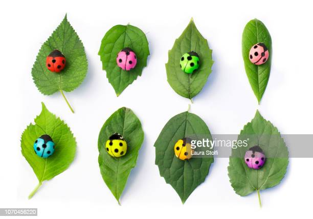 Fake multi colored ladybugs on different kinds of leaves from above