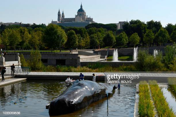 Fake scientists pour water on a hyperrealist lifesize sculpture depicting an aground sperm whale in a pond along the Manzanares river with the...