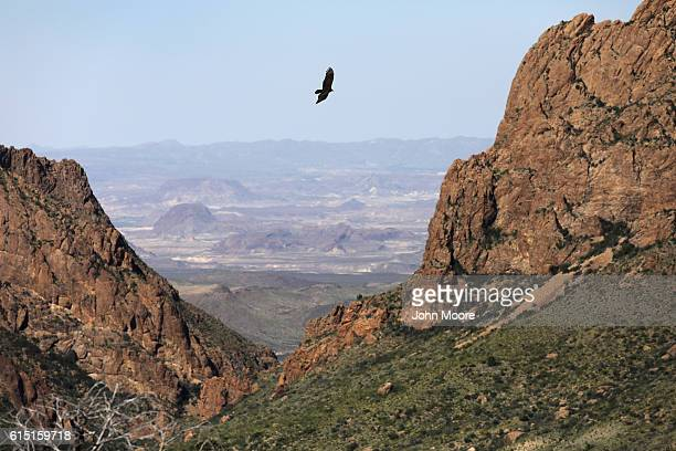 A falcon flies over the Chisos Basin on October 16 2016 in the Big Bend National Park in West Texas Big Bend is a rugged vast and remote region along...