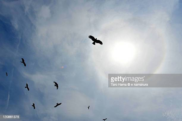 Falcon flying around sun