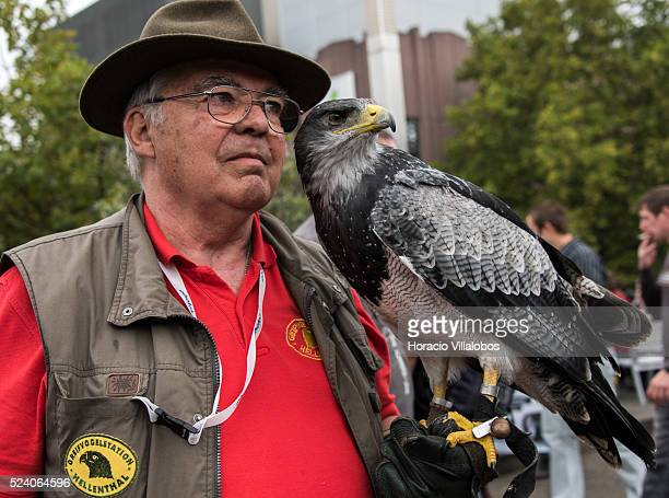 A Falcon rests on his handler's arm while posing for visitors in Photokina 2014 in Cologne Germany 18 September 2014 Photokina the world's leading...