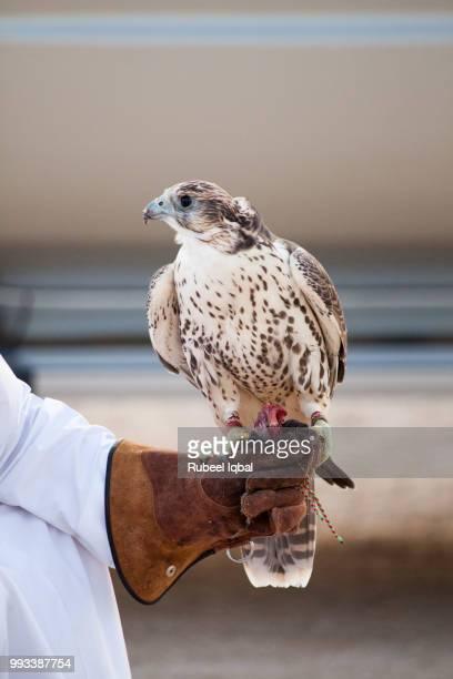 Falcon Training
