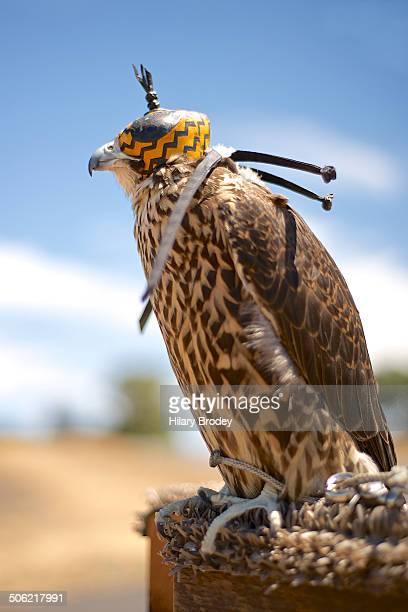 Falcon Wearing a Hood