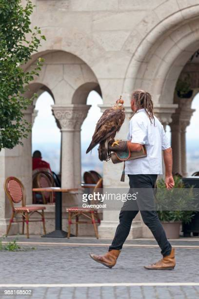 falconer and his hawk - gwengoat stock pictures, royalty-free photos & images