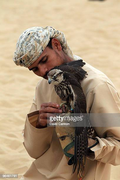 Falconer rewards his falcon with some chicken after a falconry demonstration during the visit of Tom Watson of the USA visit to the Bab Al Sham...