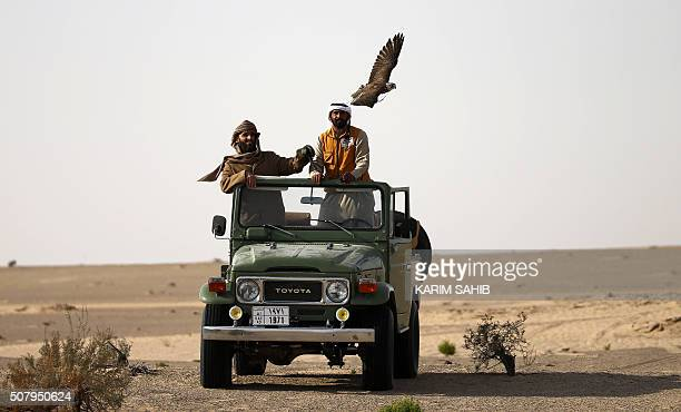 Falconers in their fourbyfour vehicle follow a hunting falcon at AlMarzoom Hunting reserve 150kms west of Abu Dhabi in the United Arab Emirates on...