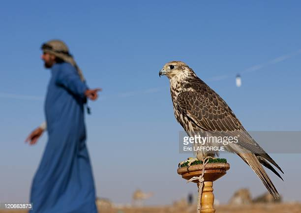 Falconery in Sakakah Saudi Arabia on January 18 2010 The falconry is known in Arabia for thousands of years One species of falcons is on display...