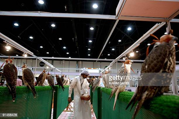 Falcons are displayed at the first day of the Abu Dhabi International Hunting and Equestrian exhibtion on September 30 2009The Royal Household...