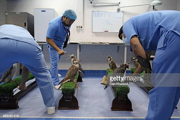 Falcons wait for health checks and other treatments at the Abu Dhabi Falcon Hospital on February 3 2015 in Abu Dhabi United Arab Emirates The Abu...