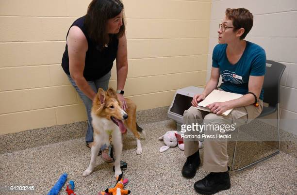 Falkirk meets Jodi McCaffrey of Westbrook for the first time at the Animal Refuge League in Westbrook Thursday August 22 2019 Here she is discussing...