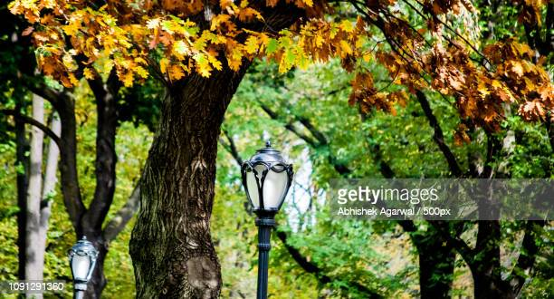 Fall 2014 Central Park, NYC