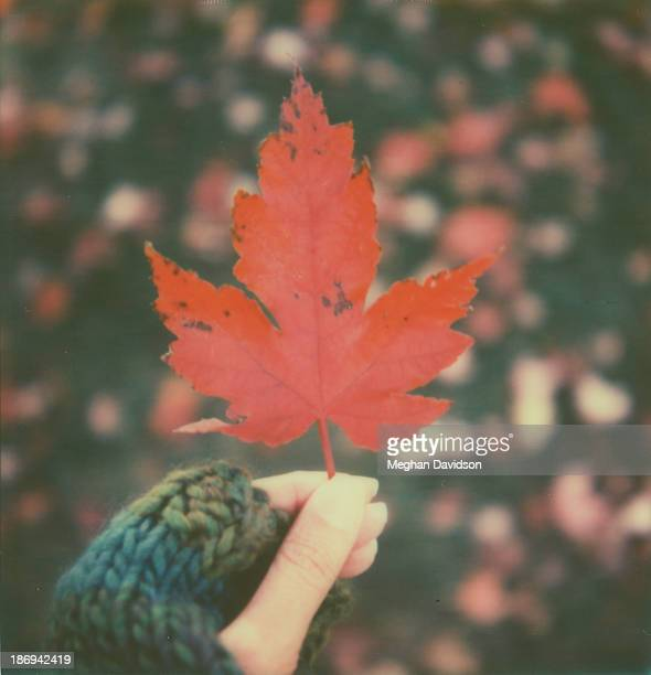 fall arrival - meghan stock photos and pictures