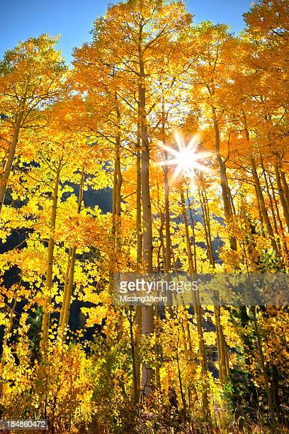 Herbst in Aspen Farbe in Colorado