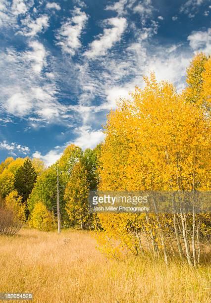 fall aspen trees and blue cloud filled sky, hope valley, californa - hope imagens e fotografias de stock
