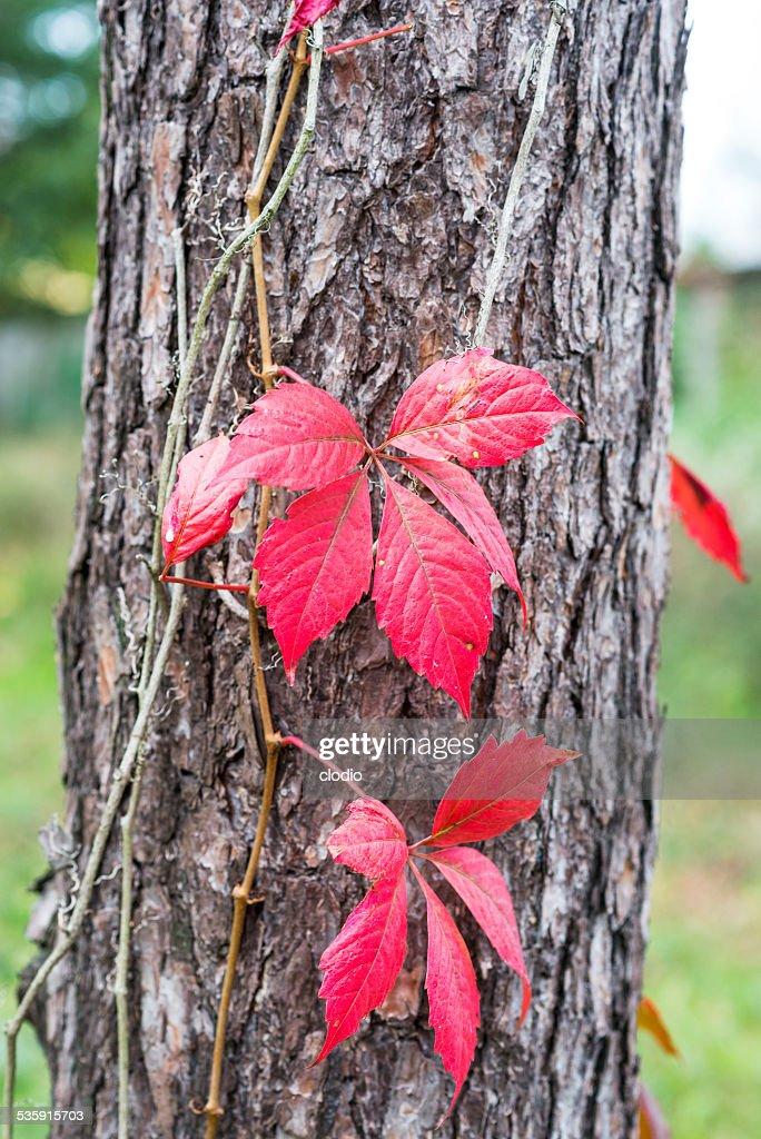 Fall at Monza Park : Stock Photo