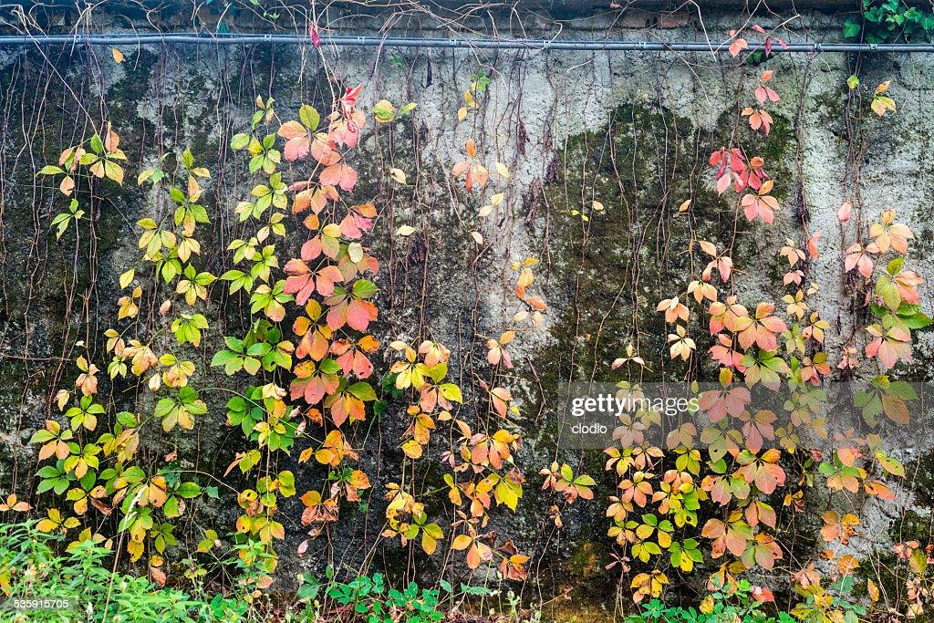 Outono no parque de Monza : Foto de stock