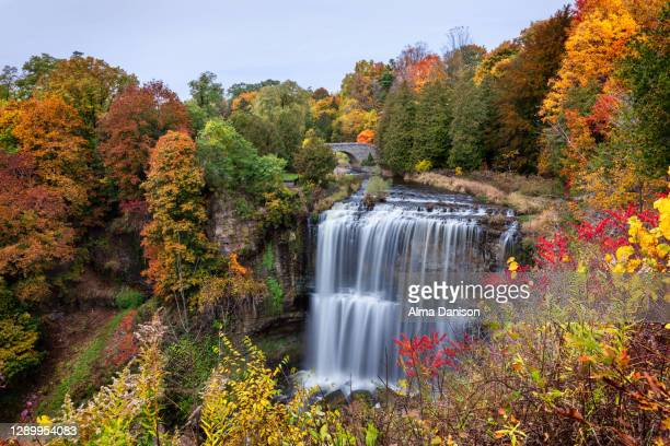 fall at webster's falls - ontario canada stock pictures, royalty-free photos & images