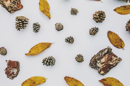 fall background.Autumn background - gettyimageskorea
