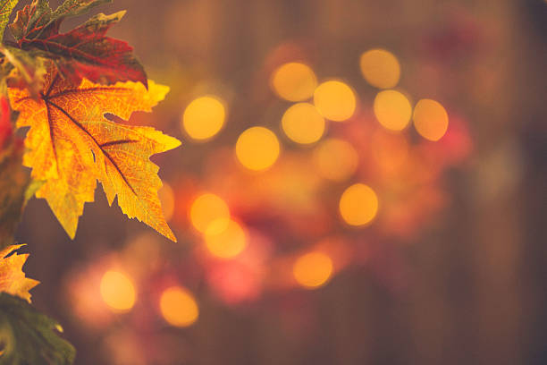 Fall Backgrounds Rustic Still Life With Leaves And Bokeh