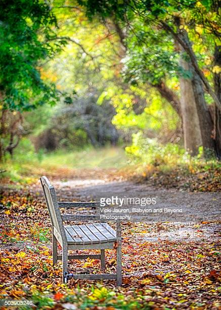 fall bench at elizabeth a morton wildlife preserve in sag harbor, long island - sag harbor stock photos and pictures