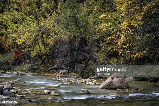 fall color and virgin river - don smith stock photos and pictures