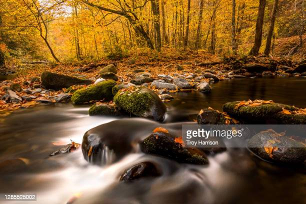 fall color in great smoky mountains national park - pigeon forge stock pictures, royalty-free photos & images