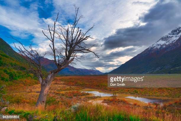 fall color in patagonia - don smith stock photos and pictures